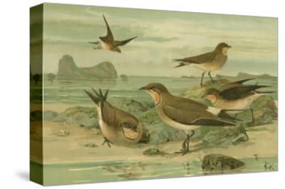 Shore Gathering V-Franz Eugen Kohler-Stretched Canvas Print