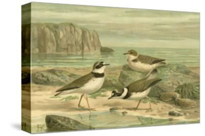 Shore Gathering VI-Franz Eugen Kohler-Stretched Canvas Print