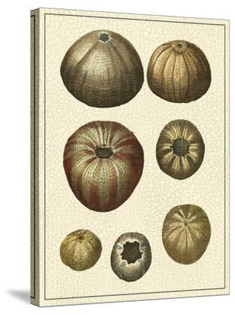 Crackled Antique Shells III-Denis Diderot-Stretched Canvas Print