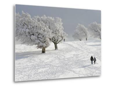 Strollers Passing Snow Covered Trees on the Mountain Schauinsland in the Black Forest , Germany--Metal Print