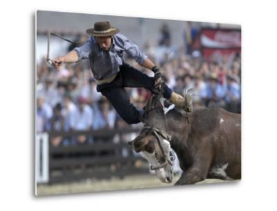 Gaucho, or Cowboy, is Thrown from a Horse as He Competes in a Rodeo in Montevideo--Metal Print
