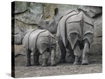Rhinoceros and Her Youngster Hang Out in their Outdoor Enclosure at the Tierpark in Berlin--Stretched Canvas Print
