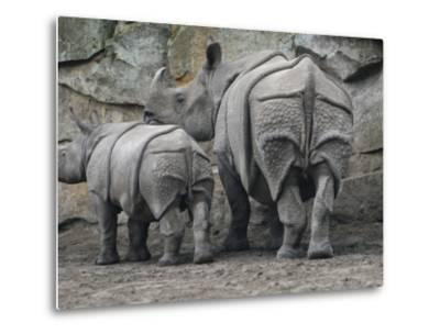 Rhinoceros and Her Youngster Hang Out in their Outdoor Enclosure at the Tierpark in Berlin--Metal Print
