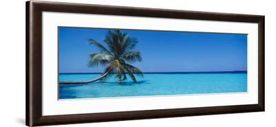 Palm Tree in the Sea, Maldives--Framed Photographic Print