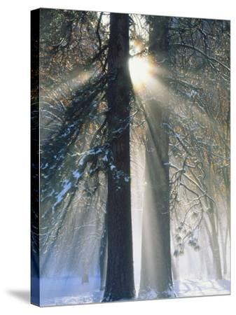 Sun Rays Streaming Through Snow Covered Trees, Yosemite National Park, California, USA-Christopher Bettencourt-Stretched Canvas Print