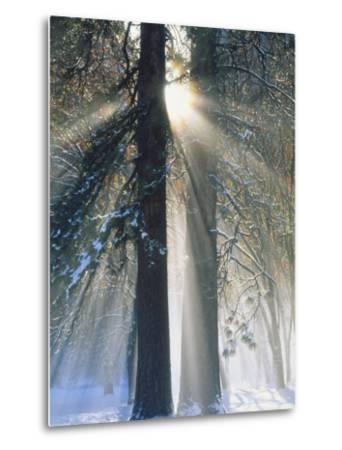 Sun Rays Streaming Through Snow Covered Trees, Yosemite National Park, California, USA-Christopher Bettencourt-Metal Print