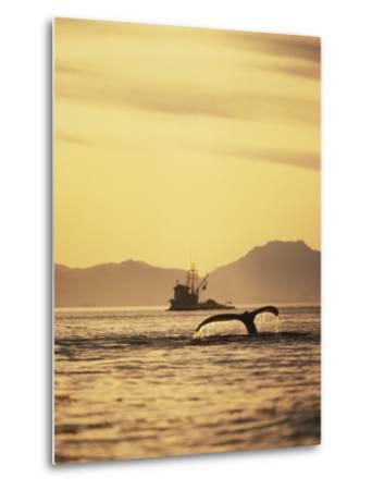 View of Humpback Whale Tail and Fishing Boat, Inside Passage, Alaska, USA-Stuart Westmoreland-Metal Print
