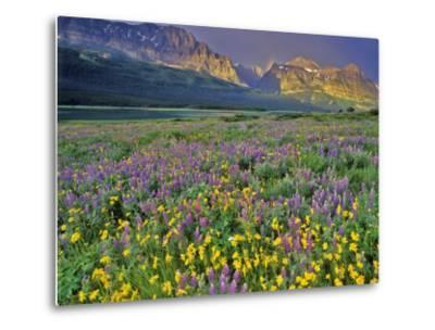 Meadow of Wildflowers in the Many Glacier Valley of Glacier National Park, Montana, USA-Chuck Haney-Metal Print