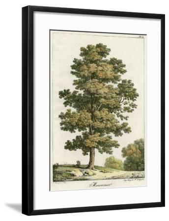 A Sweet Chestnut Tree--Framed Giclee Print
