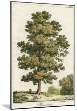 A Sweet Chestnut Tree--Mounted Giclee Print