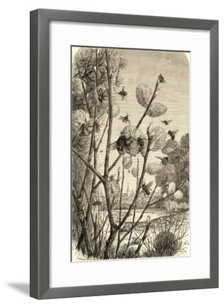 Bees in Springtime--Framed Giclee Print