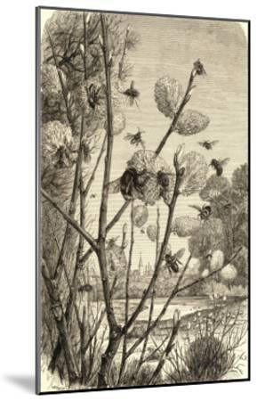 Bees in Springtime--Mounted Giclee Print