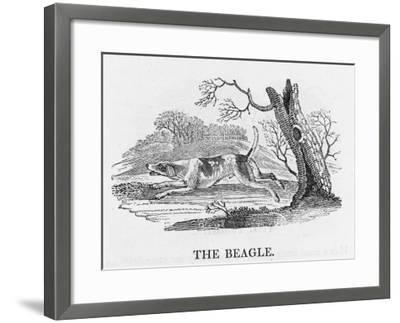 Beagle--Framed Giclee Print