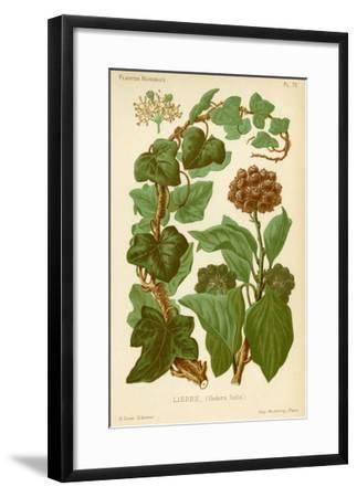 Hedera Helix Ivy--Framed Giclee Print