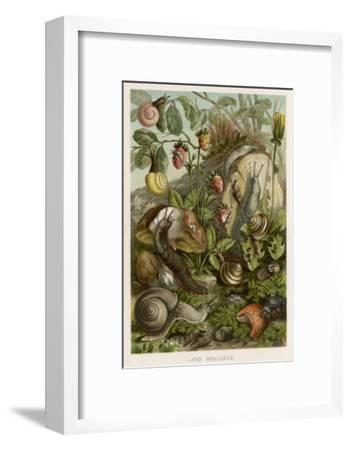 Snails on and around Various Foliage--Framed Giclee Print