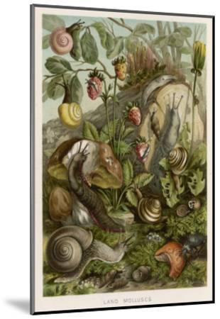 Snails on and around Various Foliage--Mounted Giclee Print