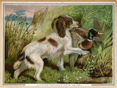 Springer Spaniel Card--Stretched Canvas Print