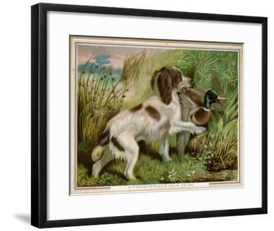 Springer Spaniel Card--Framed Giclee Print