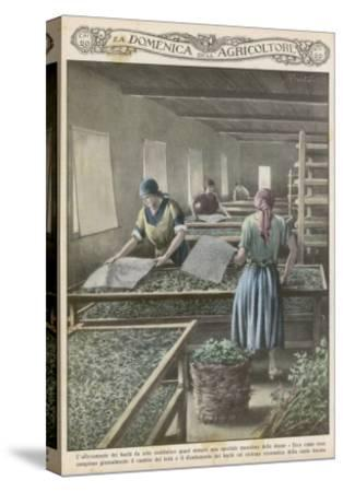 The Cultivation of Silk Worms in Italy--Stretched Canvas Print