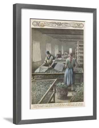 The Cultivation of Silk Worms in Italy--Framed Giclee Print