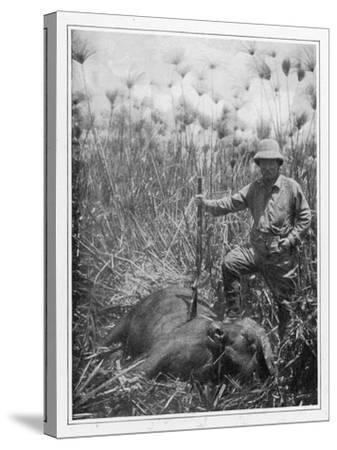 Theodore Roosevelt 26th American President with a Dead Buffalo--Stretched Canvas Print