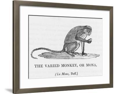 Varied Monkey--Framed Giclee Print