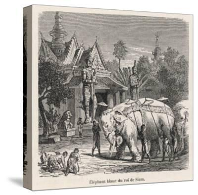White Elephant Siam--Stretched Canvas Print