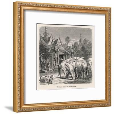 White Elephant Siam--Framed Giclee Print