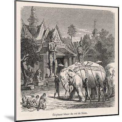 White Elephant Siam--Mounted Giclee Print