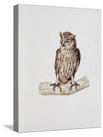 Close-Up of a Great Horned Owl Perching on a Branch (Bubo Virginianus)--Stretched Canvas Print