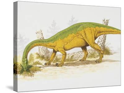 Anchisaurus Eating Plants--Stretched Canvas Print