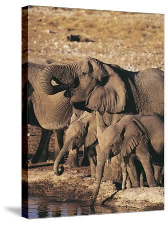 Herd of African Elephants Drinking Water, Etosha National Park, Namibia (Loxodonta Africana)-S^ Boustani-Stretched Canvas Print
