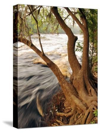 Florida, White Springs, Way Down on the Suwannee River Is Big Shoals State Park-John Moran-Stretched Canvas Print