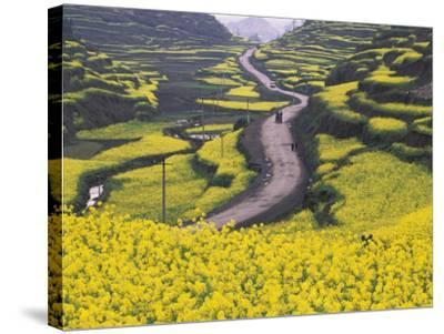China, Guizhou Province, Mountain Covered with Canola Flowers-Keren Su-Stretched Canvas Print