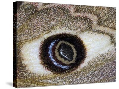 Close-Up of an Eye Pattern on the Wing of a Butterfly--Stretched Canvas Print