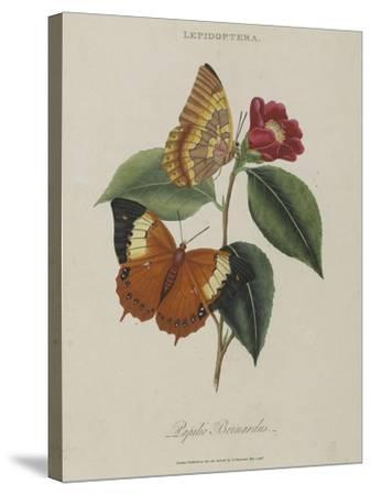 Album Donovan : an epitome of the natural history of insects in China-Edward Donovan-Stretched Canvas Print