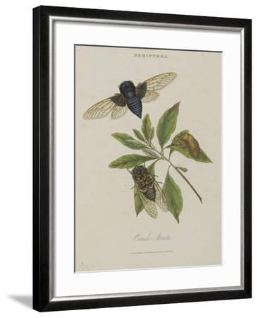 Album Donovan : an epitome of the natural history of insects in China-Edward Donovan-Framed Giclee Print