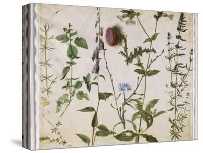 Huit études de fleurs des champs-Albrecht D?rer-Stretched Canvas Print