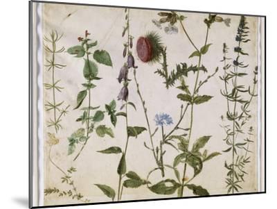 Huit études de fleurs des champs-Albrecht D?rer-Mounted Premium Giclee Print