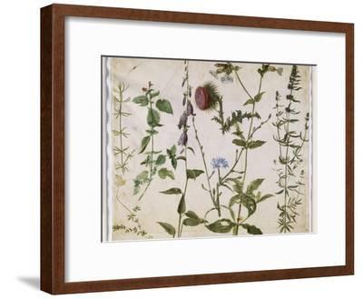 Huit études de fleurs des champs-Albrecht D?rer-Framed Premium Giclee Print