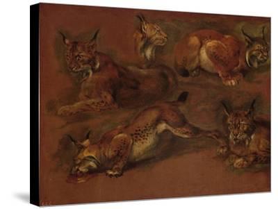 cinq lynx-Pieter Boel-Stretched Canvas Print