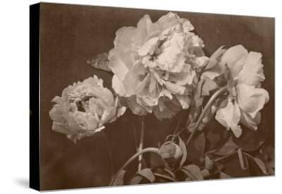 Quatre pivoines-Charles Aubry-Stretched Canvas Print
