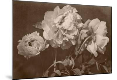 Quatre pivoines-Charles Aubry-Mounted Giclee Print