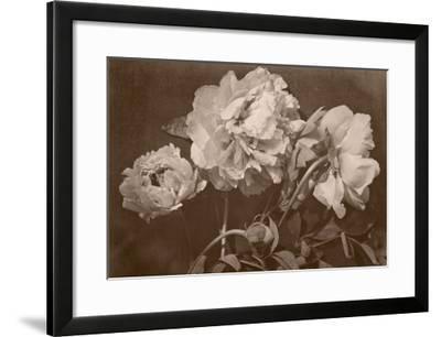 Quatre pivoines-Charles Aubry-Framed Giclee Print