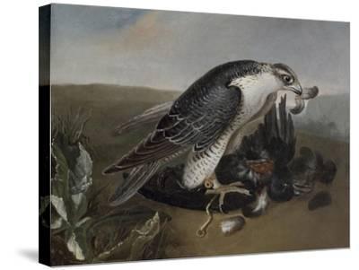Faucon dévorant un oiseau.-Nicasius Bernaerts-Stretched Canvas Print