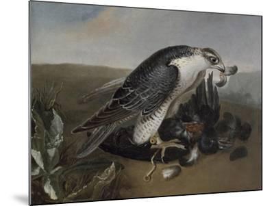 Faucon dévorant un oiseau.-Nicasius Bernaerts-Mounted Giclee Print