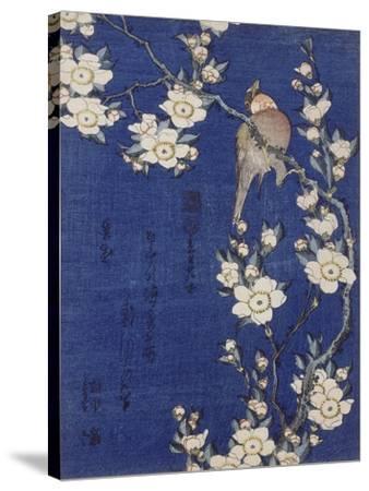 Bouvreuil et cerisier pleureur en fleur-Katsushika Hokusai-Stretched Canvas Print