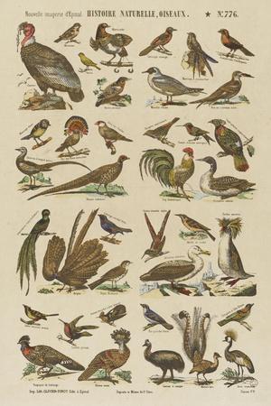 Histoire naturelle : oiseaux--Stretched Canvas Print