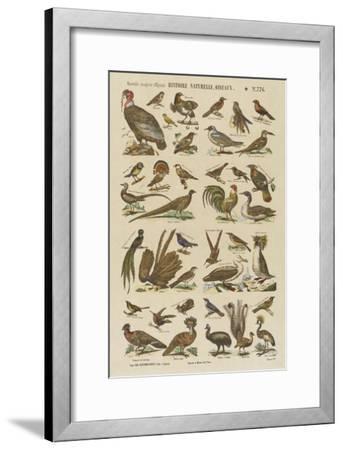 Histoire naturelle : oiseaux--Framed Giclee Print