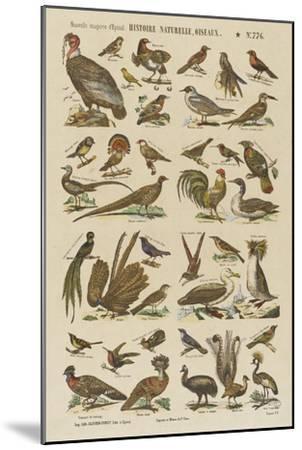 Histoire naturelle : oiseaux--Mounted Giclee Print
